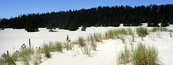 Песчаные дюны в штате Орегон