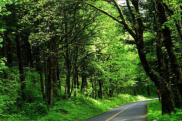 Почти везде дорога проходит по зеленым тоннелям