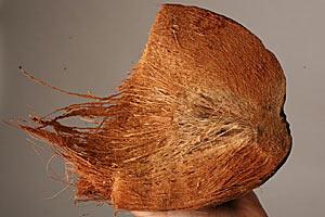 Кокос как материал для производства автозапчастей - исследования ученых в Техасе