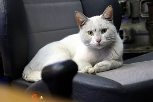 Кошка отдыхает на сиденье тренажёра, пока курсанты автошколы получают знания