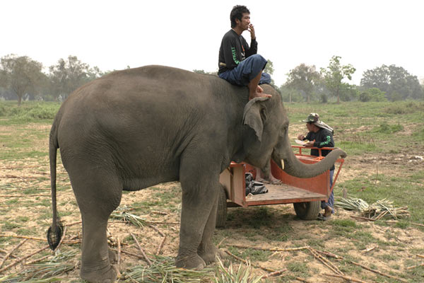 Позитивный комментарий о слонах Тайланда