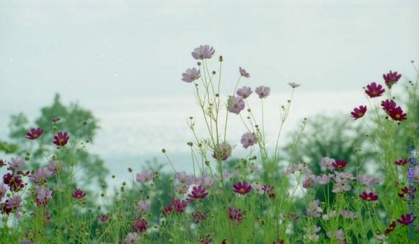 Буйство черноморского цветения в сентябре. 1997 год.