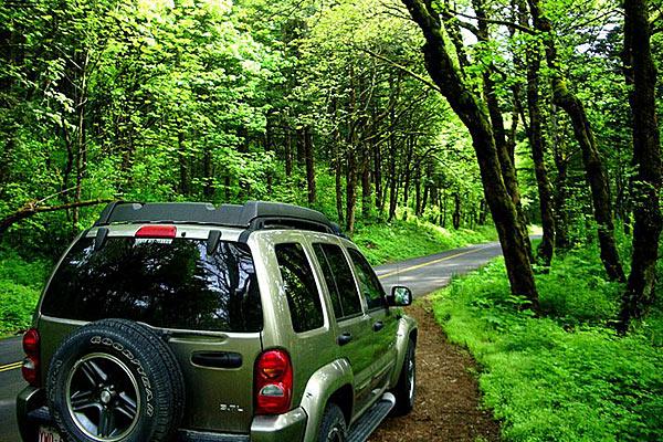 Дорога часто проходит через непроходимые леса