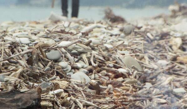Морской берег всегда полон щепок для костра. 1997 год.