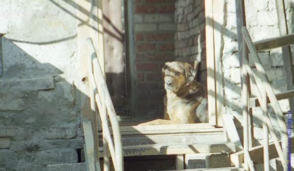 Утреннее deja vu в Геленджике. 1997 год.