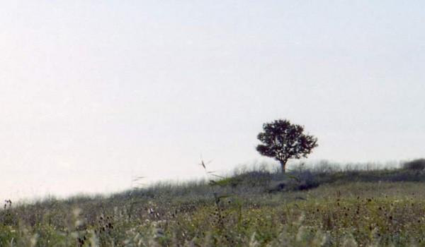 Природа Тамани осенью. 1997 год.