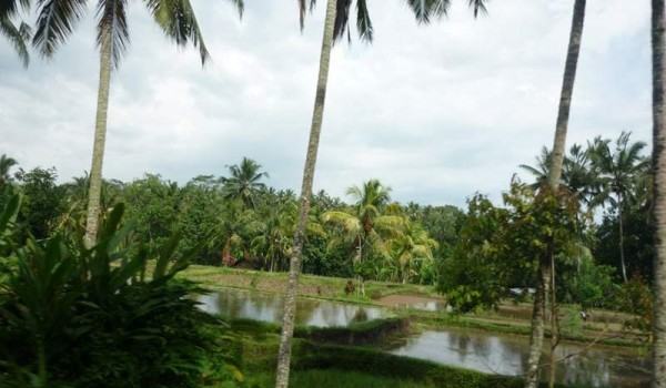 Бали. Кута. 2011 год.